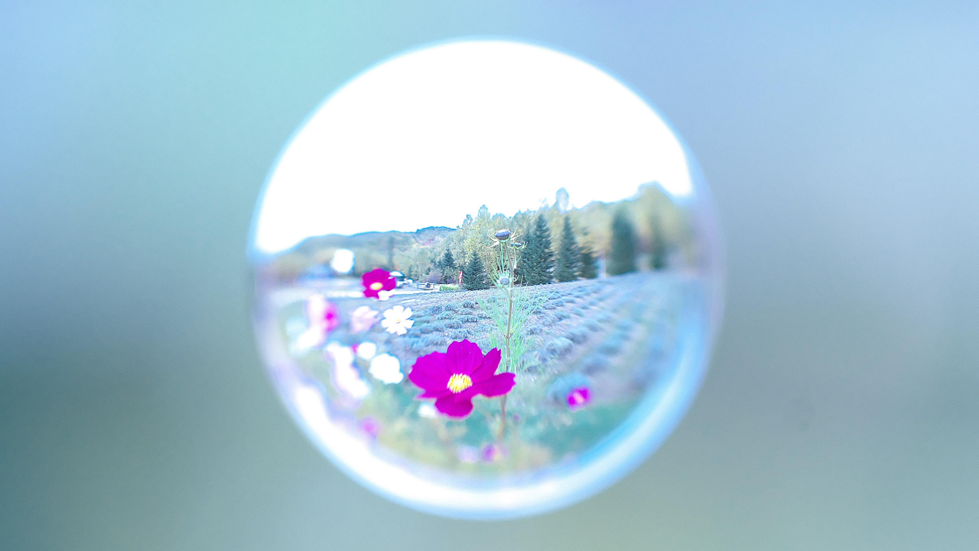唯美水滴花朵图片
